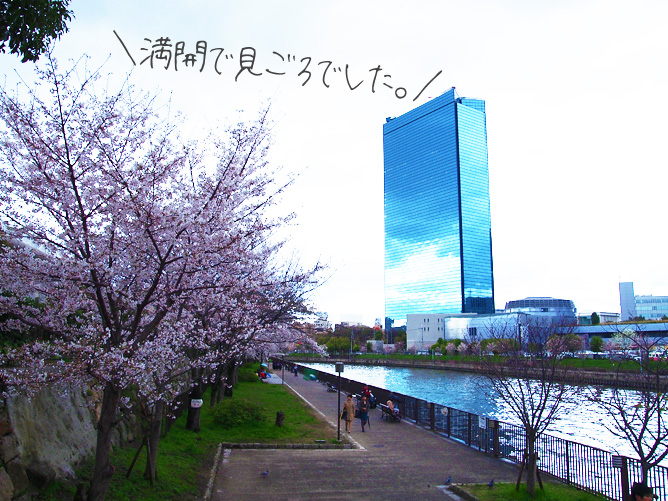 大阪城公園 桜お花見