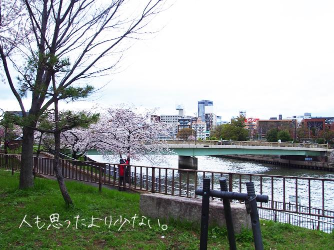 大阪城公園 3月下旬 桜お花見