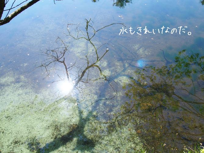 レンタサイクル 雲場池