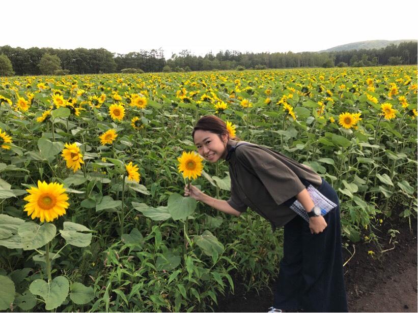 北海道旅行 ひまわり畑