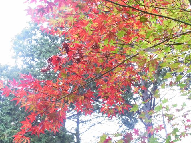 京都旅行 東福寺 月の輪殿跡